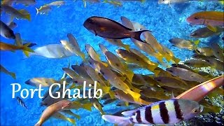 EGYPT: Red Sea snorkeling, Port Ghalib (Marsa Alam)