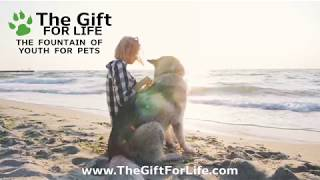 The Gift For Life Web