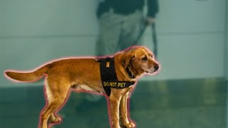 How The TSA Trains Dogs To Detect Bombs