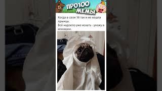 Мемы с собаками 2021. Смешные животные. Мопсы подборка #shorts