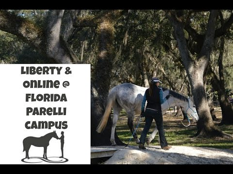 A liberty and online lesson with Elli at Parelli Campus Florida