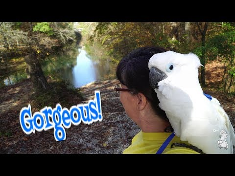 Wait Until You See Where Onni Takes Us  / Birdy Vlog episode 7