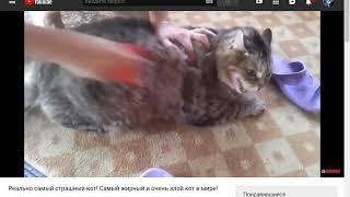 Злые коты ( с Терезой Фокс) Хотите еще видео?))))