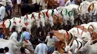 Buffalo Market In Kerala