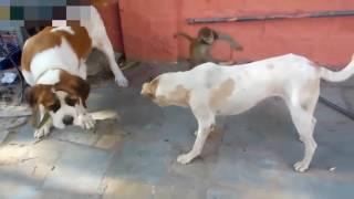 Khỉ Troll Chó Mèo Chất Nhất Quả Đất
