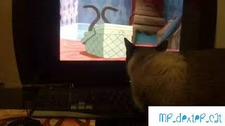 "Siamese cat watches ""we are Siamese"" scene from Lady and the Tramp"