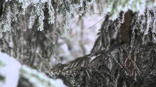 Frosted Forest - enchanting winter-scenery from Norway
