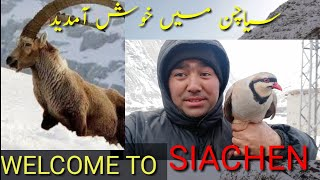 Met Markhor in Mountains |Pakistan's National bird (Partridge) and National animal (Ibex) at Siachen