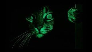 Фильм ужасов про кота. A horror film about a cat.