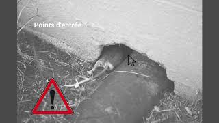 Rat Proofing avec RATDOWN - Gamme PFP 100% non toxique, résistante à l'eau et au feu