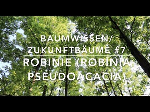 Robinie - Zukunftbäume # 7 (Baumwissen)