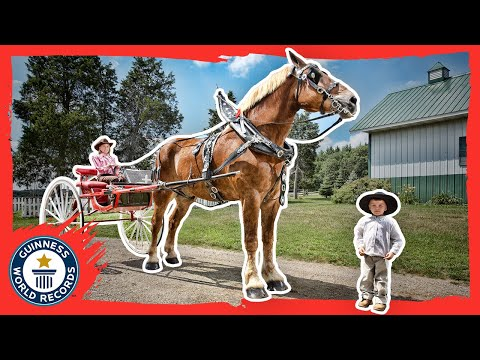 World S Tallest Horse Meet The Record Breakers Guinness World