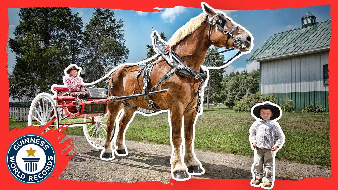 Meet Big Jake and Thumbelina: The tallest and smallest horse
