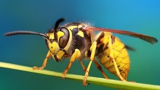 #13 Пчёлы / Bees