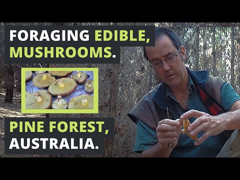 Foraging Edible Mushrooms In Australia