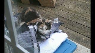 家に通ってくれていた野良猫を、家の中に招き入れてあげると・・・衝撃のプレゼントを持ってきてくれた! thumbnail