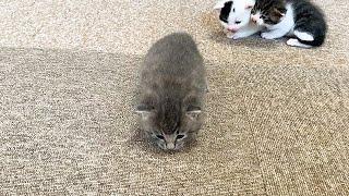 なかなか前に進めない赤ちゃん猫