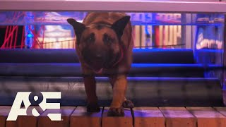 Last Two K9's Compete for Winning Title in FINAL Round | America's Top Dog (Season 1) | A&E