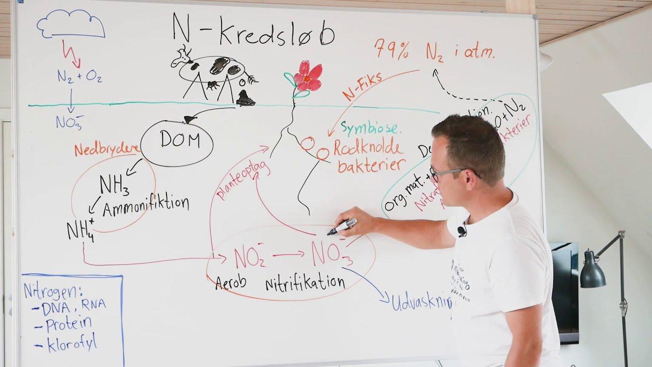 nitrogen kredsløb
