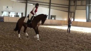 Ingrid Klimke Clinic 2015- Canter Work