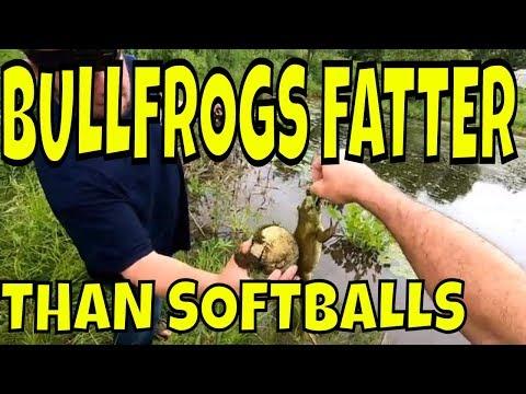 catching-massive-bullfrogs-on-kvd-frogs
