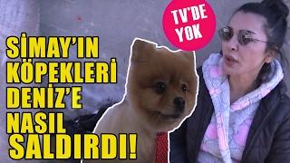 Simay Tokatlı'nın Köpeği Deniz Serkanova'ya Nasıl Saldırdı?