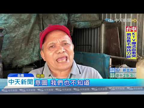 20191122中天新聞 農委會收購過重豬每日1千頭 豬農批:最低價時不做
