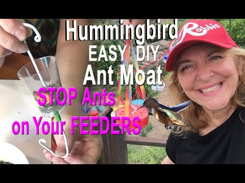 EASY DIY NO ANTS Hummingbird Feeder Ant Guard Moat How to be Free from PEST on your Bird Feeders