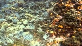 5. PN del Estrecho. Paraísos sumergidos