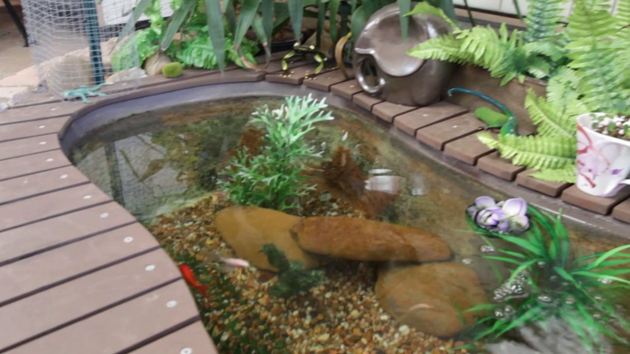 Diy goldfish pond using bathtub update 5 youtube for Bathtub fish pond