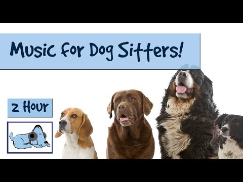 Music for Dog Sitters! Are you a Dog Walker or Dog Sitter? This Music will Help Calm Down the Dogs!