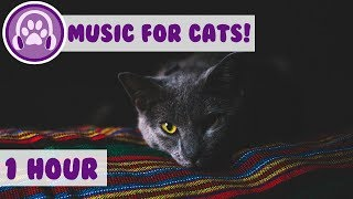 Cat Music TV - Relaxing Nature footage and wildlife footage for cats entertainment