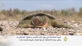 انتشار ظاهرة صيد السلاحف على نهر الزاب الأعلى بدهوك