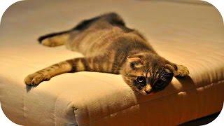Веселые Кошки 2015 / Смешное Видео с Кошками / Funny Cats Video Compilation