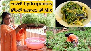 శనగ కూర/Hydroponics at home for beginners / chickpeas/Soil less container gardening/Go green/sanaga