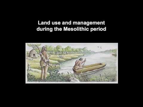Land use and management during the Mesolithic period