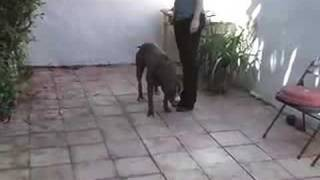 Dog Training - Train Your Dog To Recognize Their Name