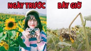 Vườn hoa hướng dương đẹp nhất Sài Gòn tan hoang