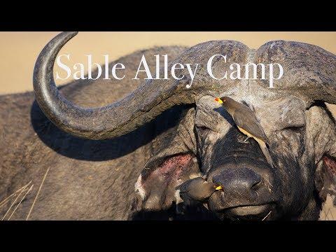 Sable Alley Luxury Safari Camp - Natural Selection Travel- Botswana