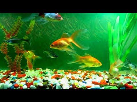 Best Aquarium Fish : Fish Aquarium a Best Remedial Measure for Vastu Defect - YouTube