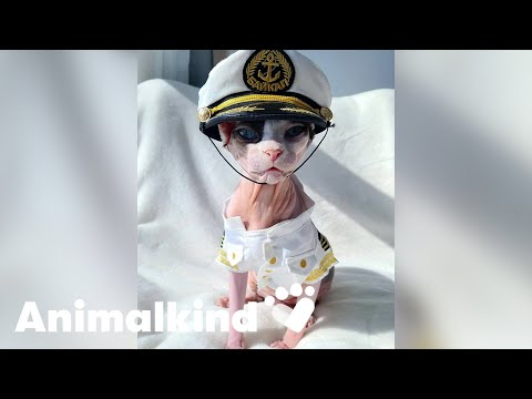 Cruise kitty makes the cutest first mate   Animalkind