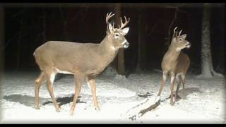 Deer Trail Pictures From (12-11- 16)