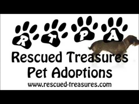 Rescue an animal from Rescue Treasures