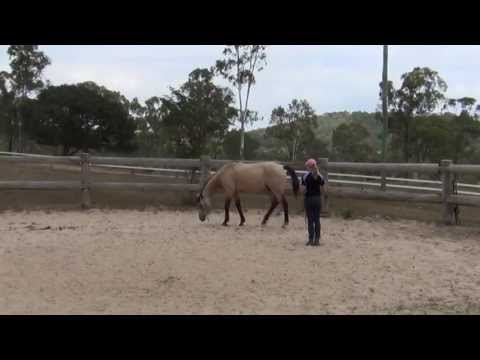 How to teach a horse to lay down naturally (without ropes) ~ Tutorial! thumbnail