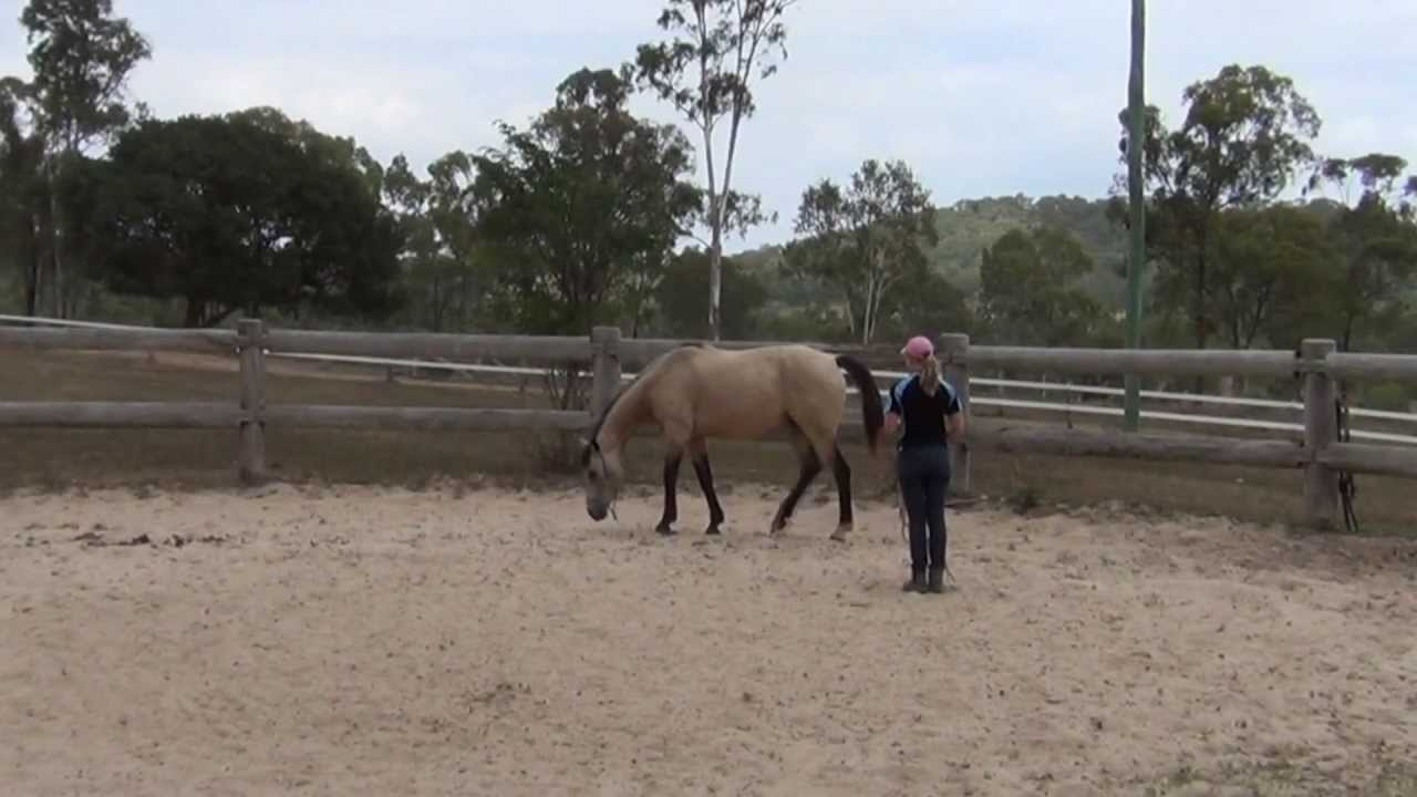 How to Put Down a Horse recommend