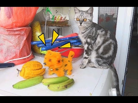 Cat So Exciting With Dog Toy | Funny Dog vs Cat Fight  2017 | Cat and Dog Funny Compilation
