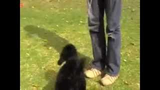 Free Top Dog Training Tip #2 - Stop Your Dog Chewing The Leash