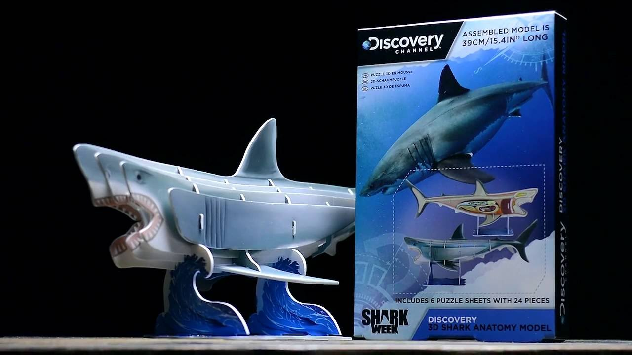 Discovery Channel 3D Shark Anatomy Model | Paladone - YouTube