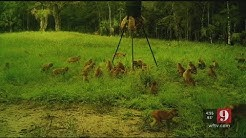 Video: Monkeys swarm Ocala man's property