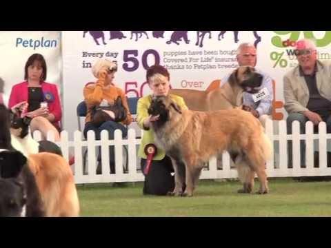 Bath Dog Show 2016 - Pastoral group